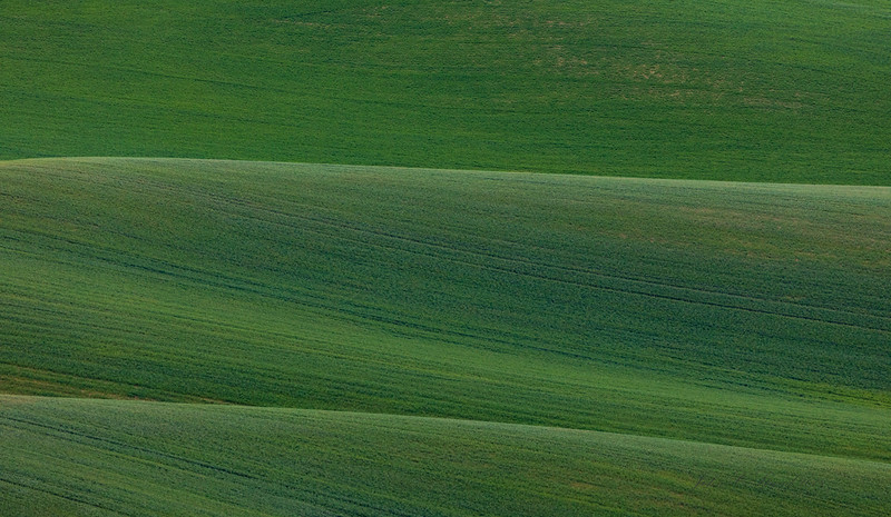 Palouse rolling farmland saturated in wheat