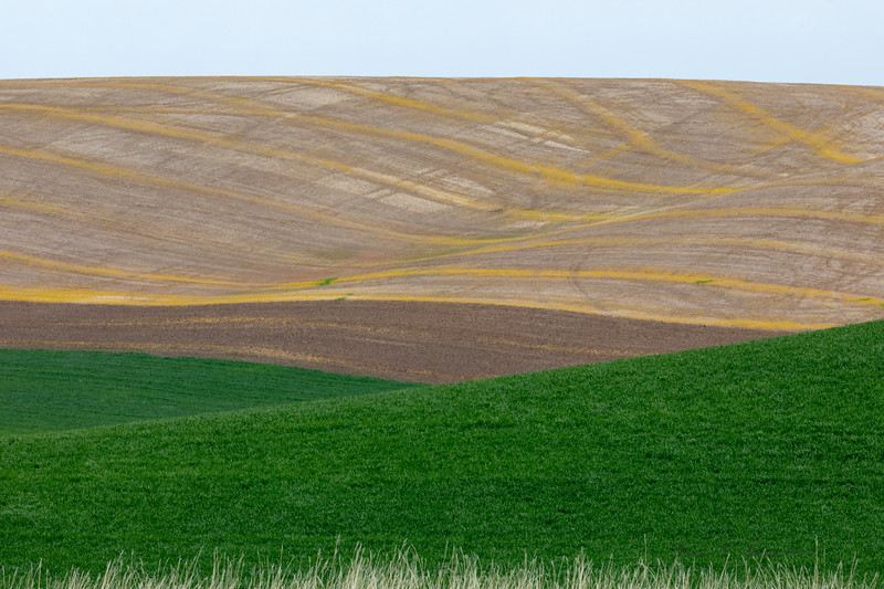 Palouse rolling farmland saturated in wheat and patterns