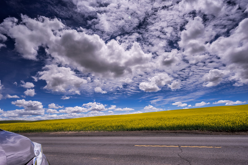 Memory  of Canola Field