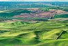 Palouse Wheat-fields & Windmills