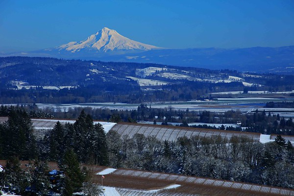 Mt Hood from Winter Hill Winery, Dundee Hills