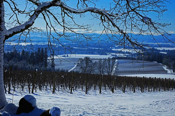 Vista Hills Vineyard in snow