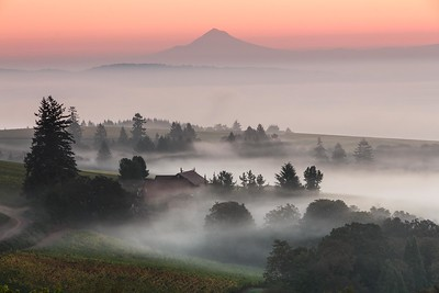 White Rose Estate -  Sunrise Over Willamette Valley