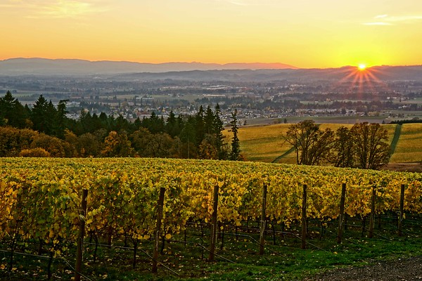 Vista Hills Vineyard sunset