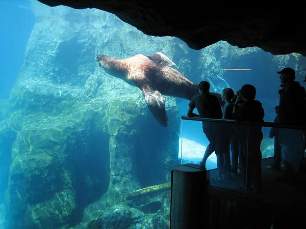 Oregon Zoo (2005)