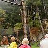 California Condor #42 puts on a show for Zoofari 2014 guests