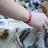 Guests interact with pelts and other animal biofacts at Zoolala.<br /> Photo Credit: McDermott Studios LLC