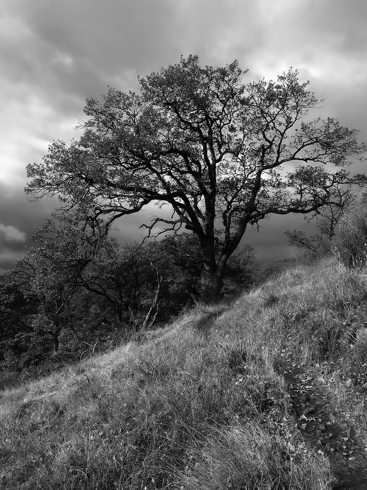 Cherry Orchard Trail near Lyle Washington