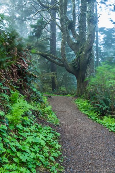 Cape Lookout Trail