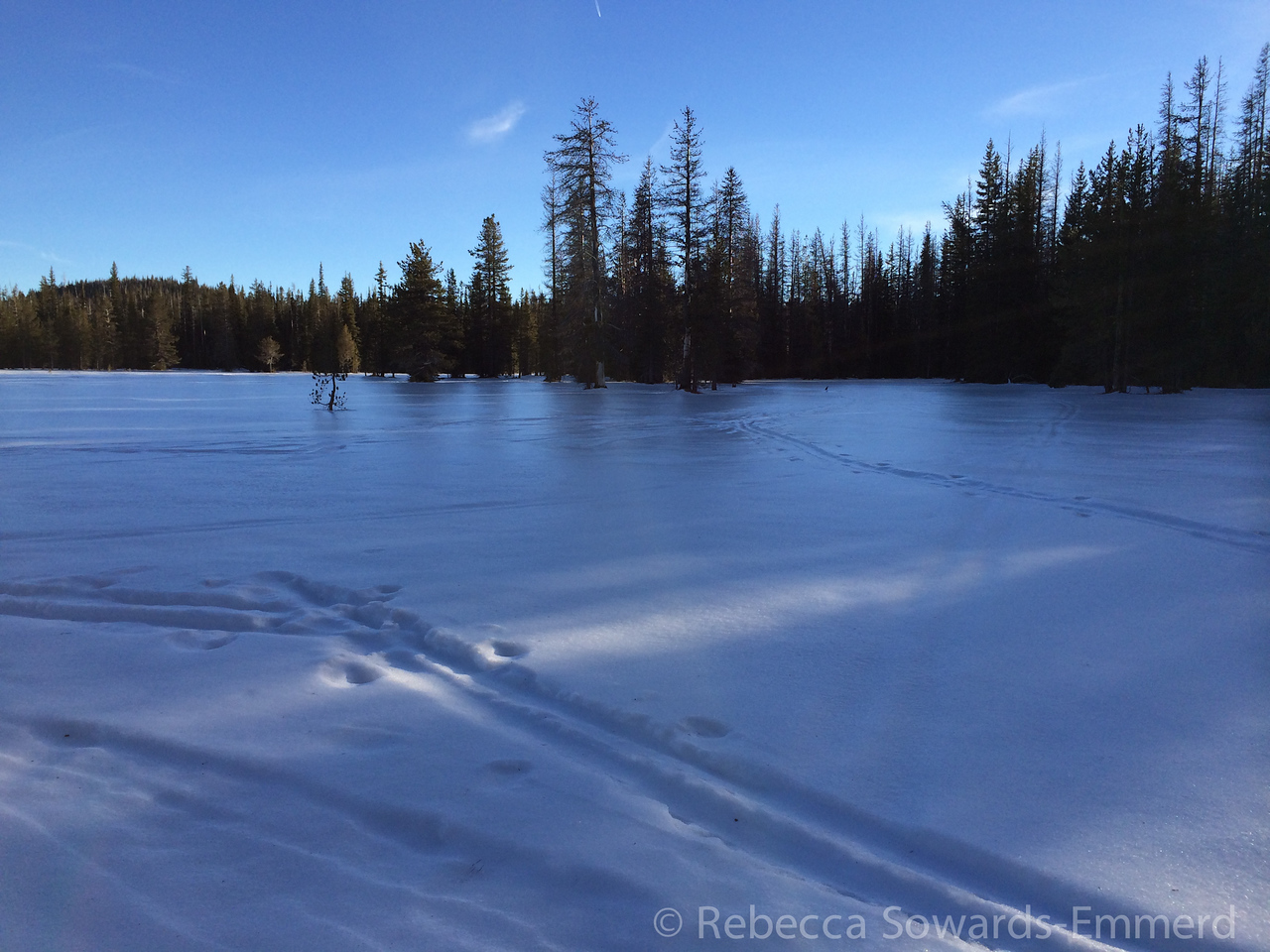 You can see the icy reflection on this meadow.
