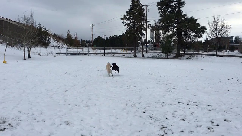 We met other friends here and our pups played in the snow while we stayed in the heated outdoor patio.