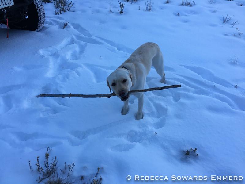 I haz a stick