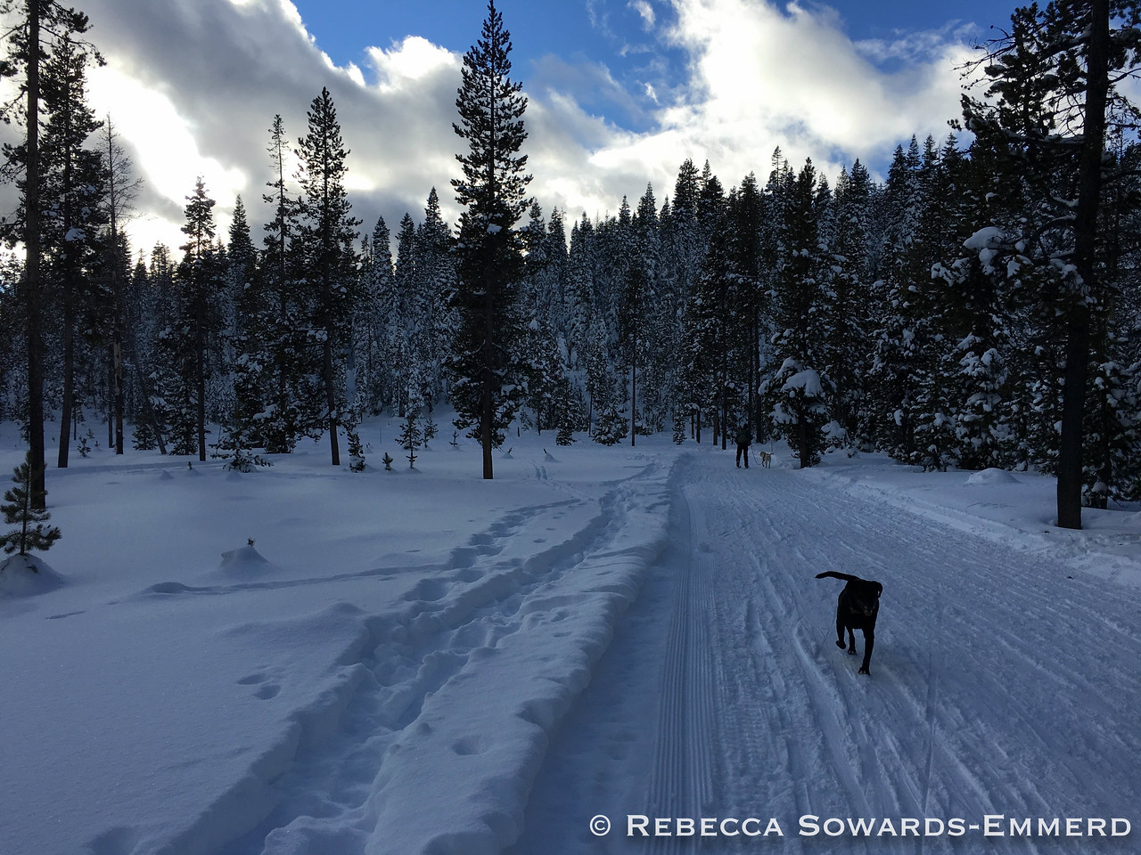 Great groomed trails for cross-country skiing!