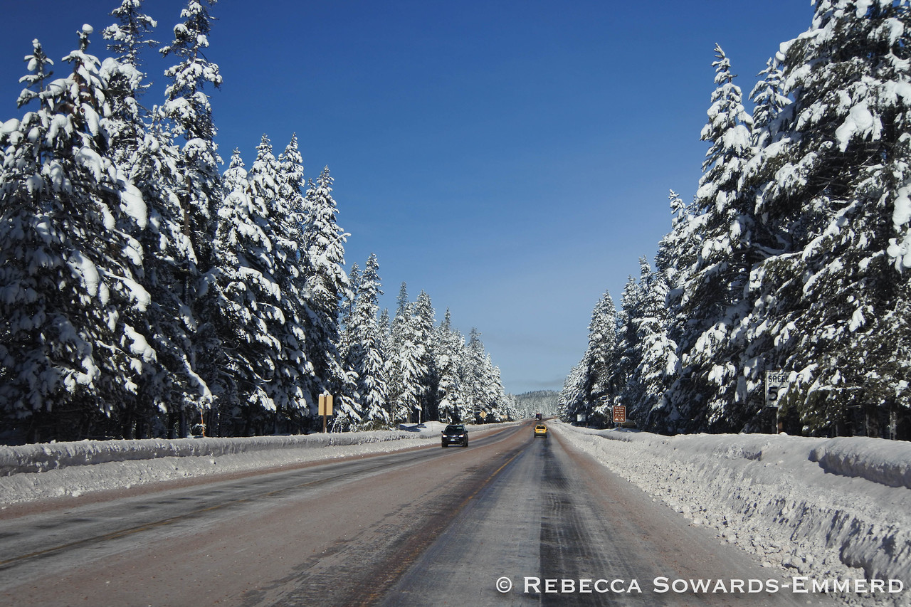 It was cold enough that the recent snow was still clinging to the trees. It made for a beautiful drive to Bend!