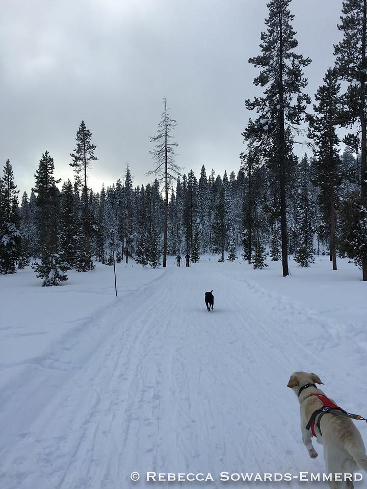 Skiing at Wanoga Sno Park