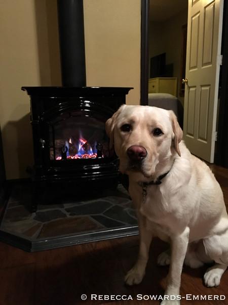 Thor enjoyed the cozy stove.