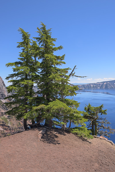 Group of Trees on the Cliff