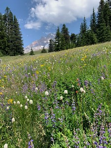 Wildflowers as far as the eye can see.