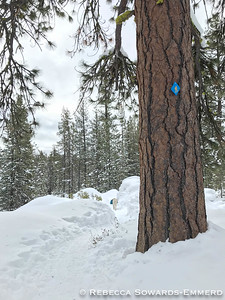 The snowshoe trails are marked with the cute blue diamond with a snowshoer. The ski trails are a solid blue diamond.