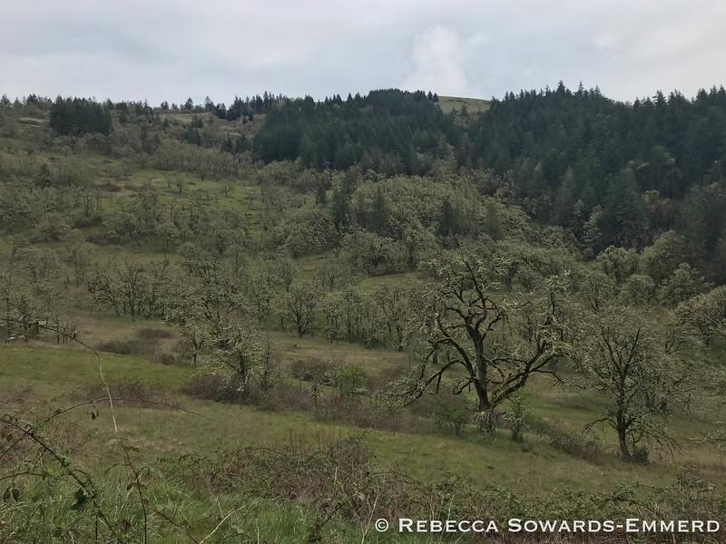 Hiking in Mt Pisgah Arboretum