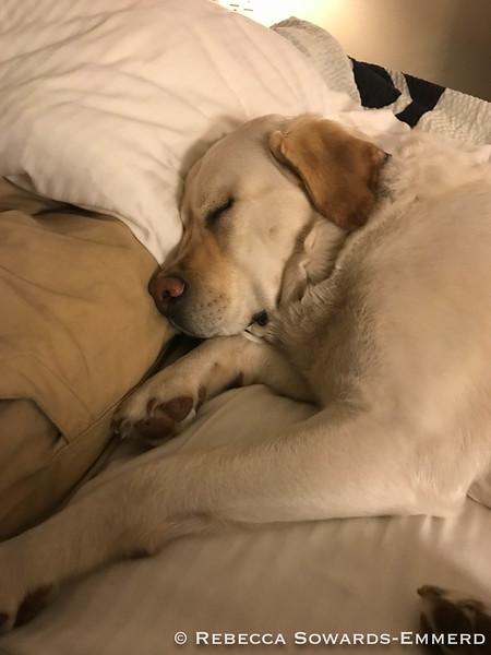 Another sleepy dog day!