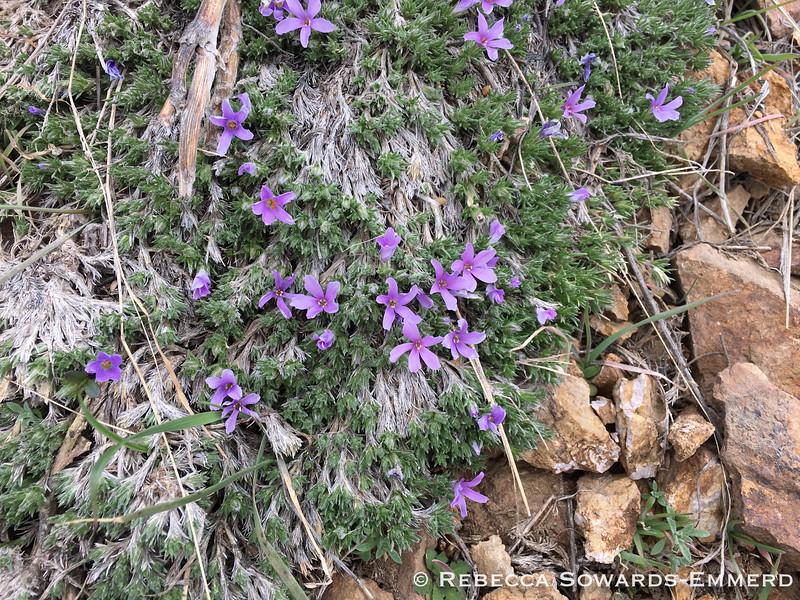 More wildflowers!! Filaree?