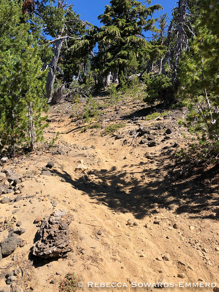 The trail is mostly shaded and soft forest duff, but the final stretch is hot and sandy.