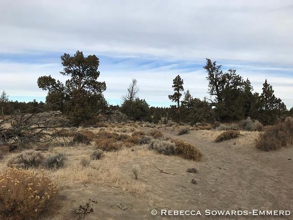 Typical terrain through juniper desert.