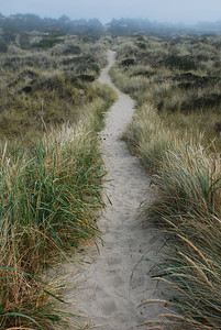 Walking in the dunes