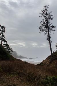 tree at the coast