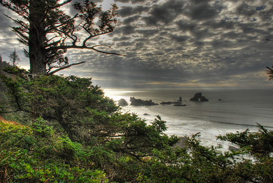 View from a trail in Ecola Park