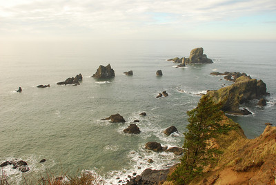 Ecola Point dragons tail