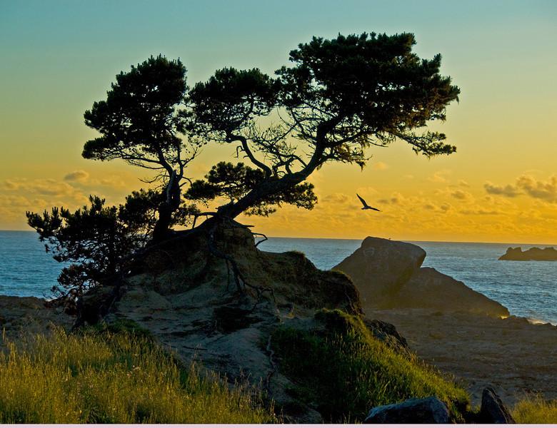 coast-bird-bonzi_0238