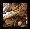 wood-and-rock-kate1_MG_2719