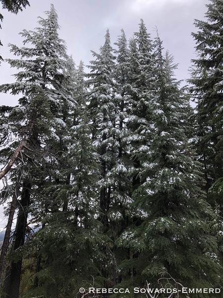 Fresh snow in June.