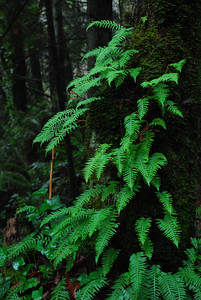 ferns on a tree
