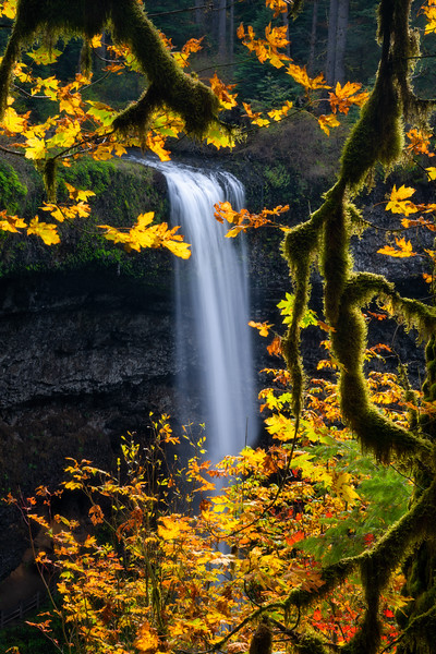 South Falls Backlit Maple