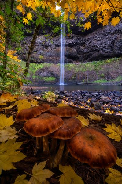 South Falls Magic Mushroom Discovery
