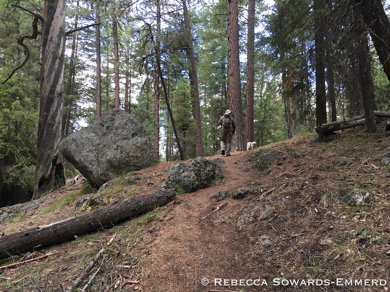 Hiking through the shaded and quiet Ochoco National Forest