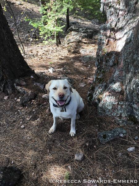 I love hiking! Says thor the world's happiest dog.