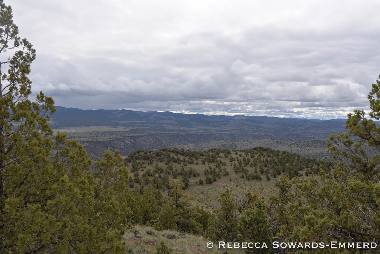 View towards the Maury Mountains from the summit of taylor Butte.