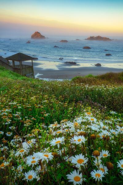 Bandon Beach Summer Flowers