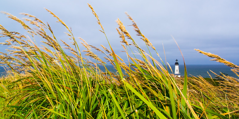 Yaquina Tall Grass