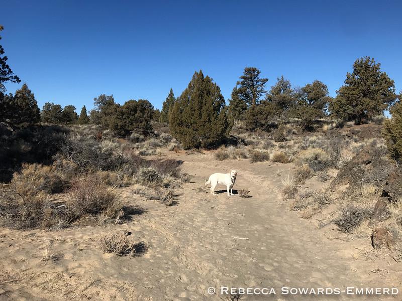 Tumulus Trail
