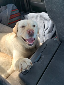 Happy pup on the drive home!
