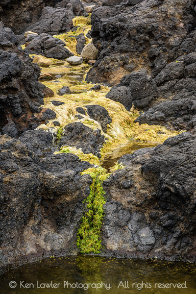 Seaweed waterfall