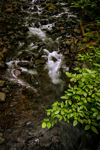 River along the Columbia River Gorge.  Photo by Kyle Spradley | www.kspradleyphoto.com