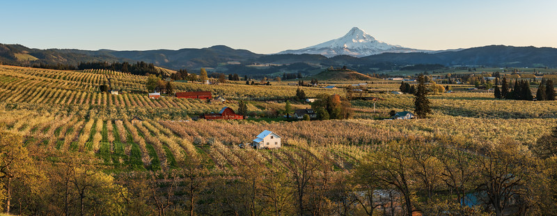 Hood River Orchards Panorama