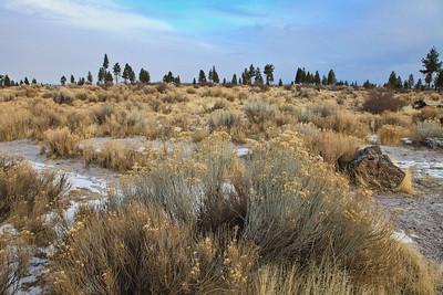 High Desert near Bend, Oregon