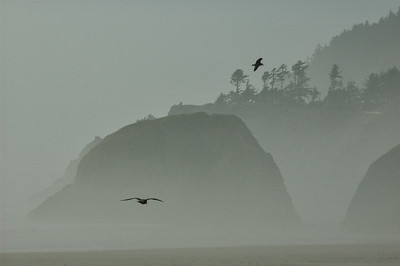 A Foggy Day at Cannon Beach